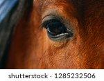 horse eye close up in winter    Shutterstock . vector #1285232506
