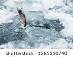 live fish on a hook in the form ... | Shutterstock . vector #1285310740