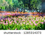 colorful of tulip flowers and... | Shutterstock . vector #1285314373