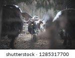 yaks of italy   Shutterstock . vector #1285317700