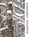 birdhouse on a tree under the... | Shutterstock . vector #1285324873