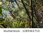 branches of an exotic southern...   Shutterstock . vector #1285361713
