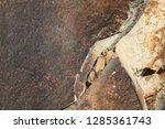 excellent natural background...   Shutterstock . vector #1285361743