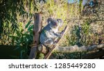 a close up photo of a beautiful ... | Shutterstock . vector #1285449280