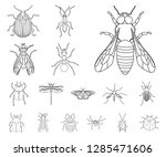 vector illustration of insect...
