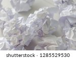 no idea and fail concept   many ...   Shutterstock . vector #1285529530
