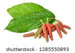 piper longum isolated on white...   Shutterstock . vector #1285550893