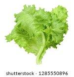 lettuce isolated on white...   Shutterstock . vector #1285550896