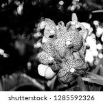 orchidseveral colors ...   Shutterstock . vector #1285592326
