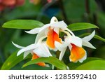 orchidseveral colors ...   Shutterstock . vector #1285592410