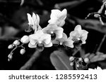 orchidseveral colors ...   Shutterstock . vector #1285592413