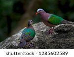 two emerald dove on stone in... | Shutterstock . vector #1285602589