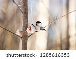 close up image of cute marsh... | Shutterstock . vector #1285616353