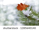 oak leaf on the needles of the... | Shutterstock . vector #1285640140