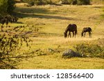horses on the field | Shutterstock . vector #128566400