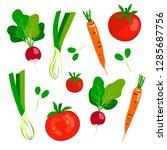 vector fresh vegetables green... | Shutterstock .eps vector #1285687756