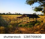 hut with rice field after... | Shutterstock . vector #1285700830