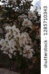 natural  beautiful  earth    Shutterstock . vector #1285710343