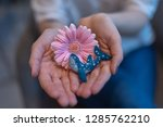gerbera flower and brooch in... | Shutterstock . vector #1285762210