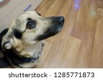 the snout of a dog with... | Shutterstock . vector #1285771873