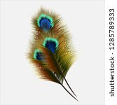 peacock feather in realistic... | Shutterstock .eps vector #1285789333