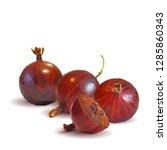 gooseberries low poly. fresh ... | Shutterstock . vector #1285860343