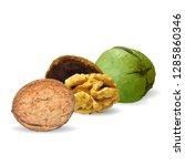 walnut low poly. fresh ... | Shutterstock . vector #1285860346
