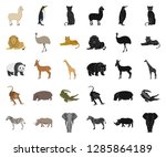 different animals cartoon black ... | Shutterstock .eps vector #1285864189