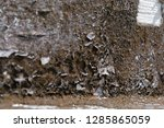 old vintage crack wall  | Shutterstock . vector #1285865059