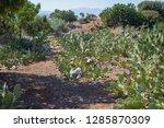 cactus meadow wild garden...   Shutterstock . vector #1285870309