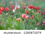 mix of spring tulips flowers.... | Shutterstock . vector #1285872079