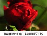 beautifull macro flower in...   Shutterstock . vector #1285897450