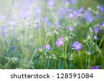 Purple Flower Field with sunshine in spring - stock photo
