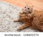 Red Fluffy Cat Is On Carpet ...