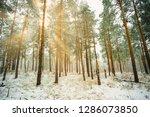 dreamy landscape with winter... | Shutterstock . vector #1286073850
