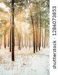 dreamy landscape with winter... | Shutterstock . vector #1286073853