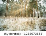 dreamy landscape with winter... | Shutterstock . vector #1286073856