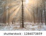 dreamy landscape with winter... | Shutterstock . vector #1286073859