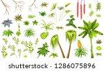 set exotic plants jungle. leafs ...   Shutterstock .eps vector #1286075896