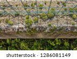 bubble shaped moss on a low... | Shutterstock . vector #1286081149