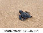 Baby turtles making it