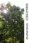 Sunlight Peeking Through A Tree