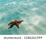 red sea star close up on sandy... | Shutterstock . vector #1286261599