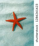 red sea star close up on sandy... | Shutterstock . vector #1286261623