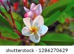 flower flesh nature garden   Shutterstock . vector #1286270629