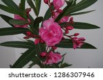 various flowers in different...   Shutterstock . vector #1286307946