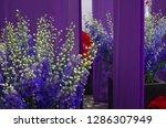 various flowers in different...   Shutterstock . vector #1286307949