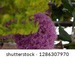 various flowers in different...   Shutterstock . vector #1286307970