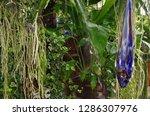 various flowers in different...   Shutterstock . vector #1286307976