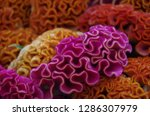 various flowers in different...   Shutterstock . vector #1286307979